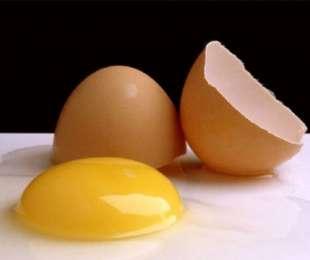 Las propuestas de Holanda para el huevo campero en la UE